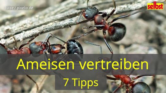 Ameisen Hausmittel Selbst De