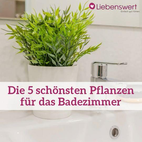 Badezimmerpflanzen: Die 5 Pflanzen sind perfekt geeignet ...