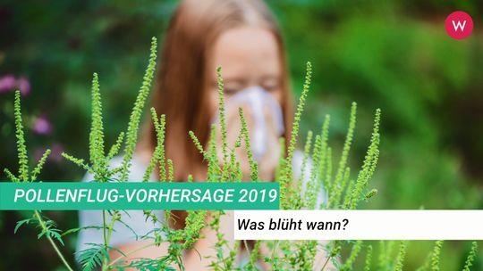 Blütezeit birke 2019